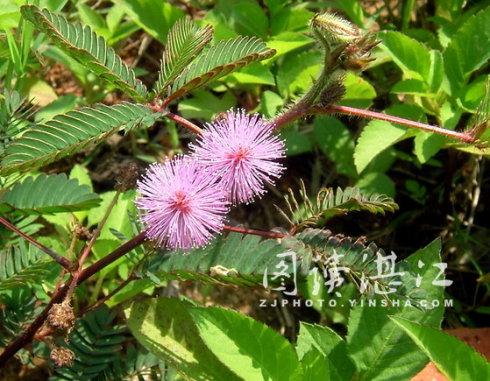 有趣的植物 - 宝宝 - zengjunbaobao 的博客