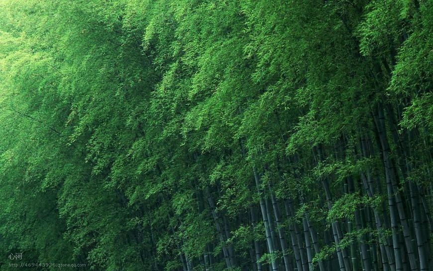 竹林听雨◆音画欣赏◆ - 牧笛 - ☆☆☆【棋士牧笛之藝術客栈】☆☆☆