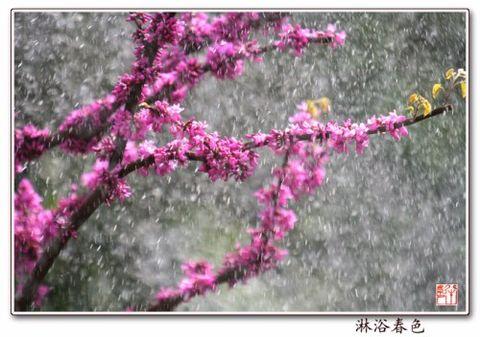 拥抱朝霞(原创) - 冰芯雪蕊 - 冰天雪地的足迹