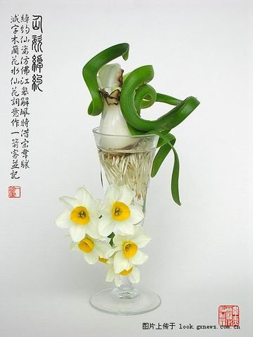 水仙花优美造型组图 - 天高云淡 - 天高云淡