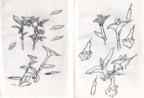 花草速写图片 画花草树木的简易图,二方连续图案 花草图
