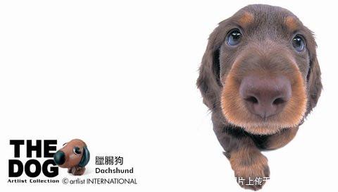 世界名犬的婴儿期 - 利马玫瑰 - 利马玫瑰的博客