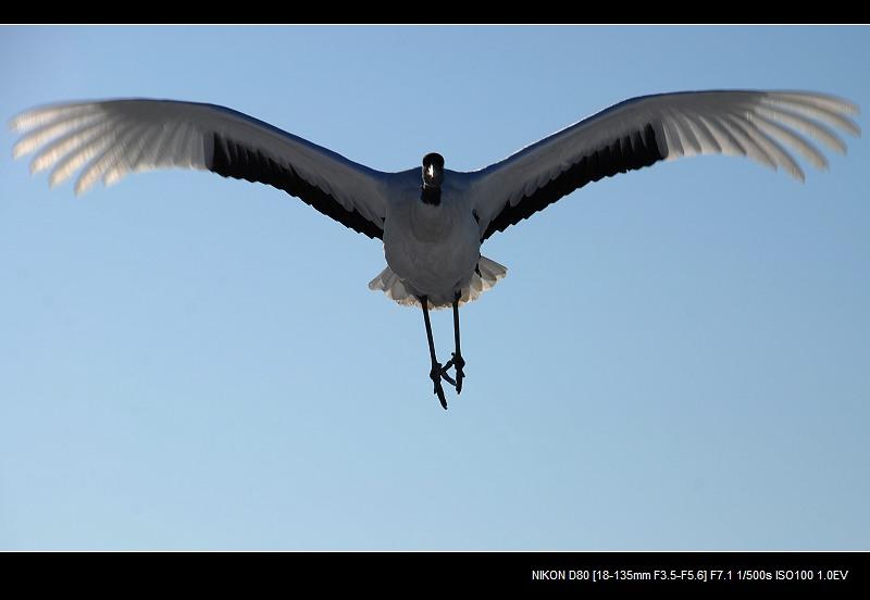 我飞,我飞,我飞飞飞 - 西樱 - 走马观景