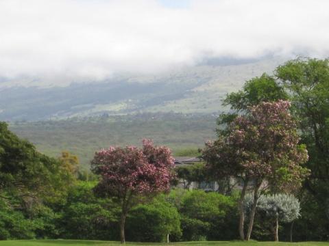 夏威夷风景 - 梦溪园 - 460719797的博客