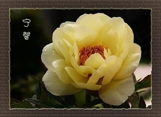 [转载]携一份雅致,品一份宁静 - nings_shen - nings_shen的博客