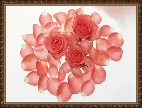 玫 瑰 园 - 珠峰 - 珠峰博客