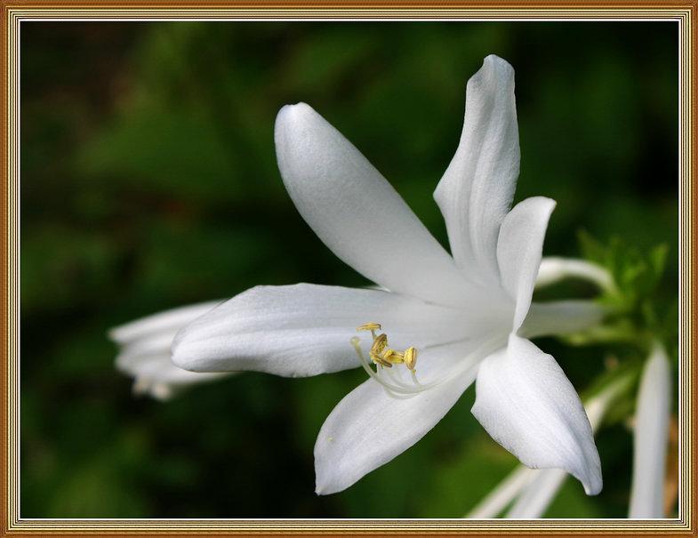 花卉大观园(七) - lzxinggong -