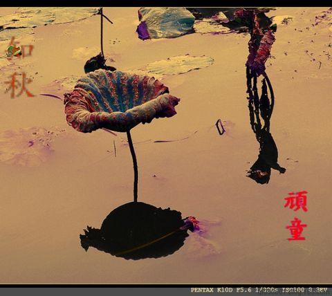 秋莲、秋荷塘 - 时代顽童 - lp050601的博客