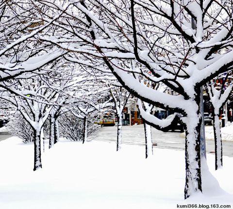 雪 - kumi366 - kumi366的博客
