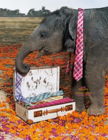 Hermès 大象 - 暖暖 - 最好的时光
