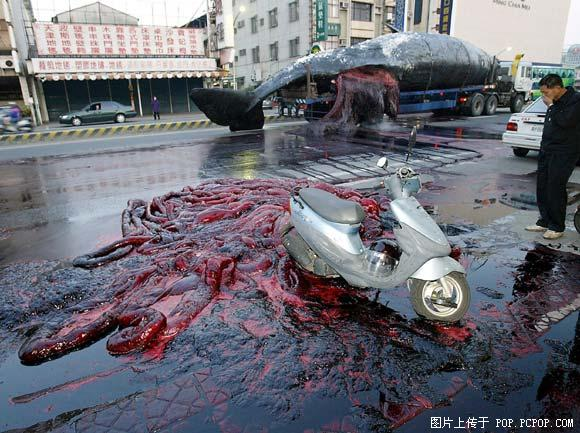 爆炸的鲸鱼