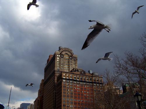 美国影像纪事之一:傻瓜机纽约华盛顿之旅 - 朱大可 - 朱大可的博客