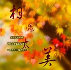 留言帖 - 白云飘瓢 - .