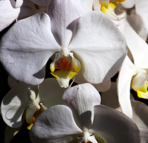 中秋的花卉市场 - 陆新之 - 陆新之的博客