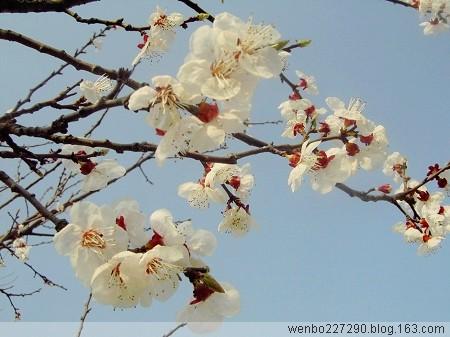 七绝-春香(原创) - 文静 - 《文静》博客