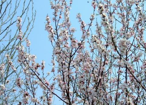 鲜花盛开的地方 (原创) - gbzh118 - 我行我摄