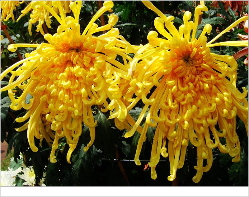 花团锦簇 - 语溪子 - 语溪子的博客