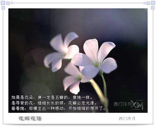 花解花语 - 西门冷月 -                  .
