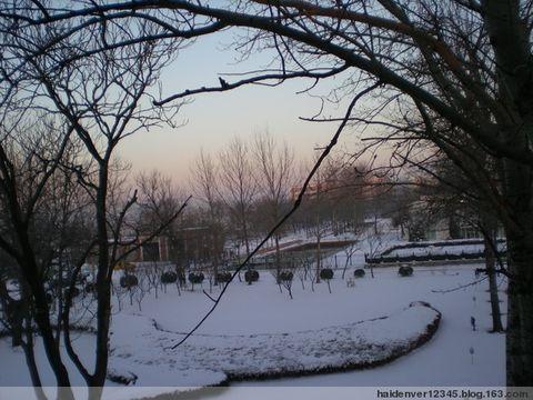 2008年的第一场雪[原] - 海的女儿 - 海的女儿--您真诚的朋友