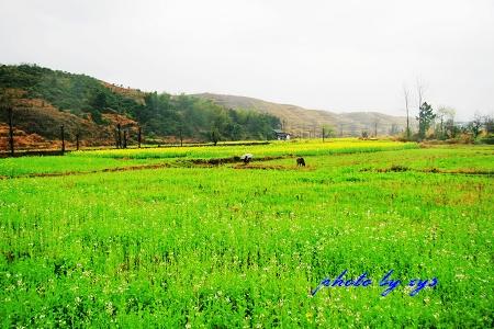 [原创]万里迊春12--怀化田野 - 自由诗 - 人文历史自然 诗词曲赋杂谈