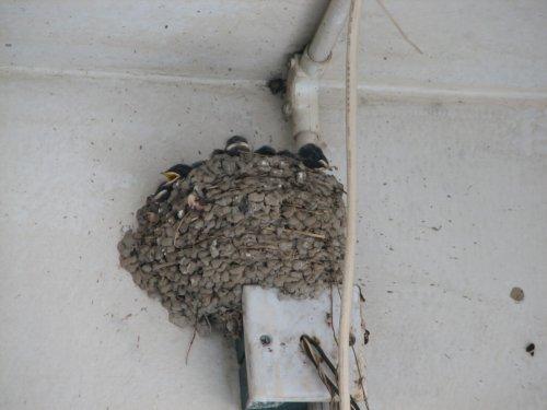 鸟巢附近的鸟巢(组图) - 杨孝文 - 杨孝文的博客