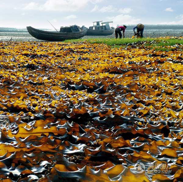 【转载】引用 摄影家的杰作3 - 金海岸 - 金海岸