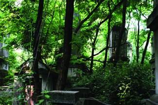 """""""文革""""墓群:捕捉那群年轻的身影(《国家人文地理》7月号) - 国家人文地理 - 《国家人文地理》官方博客"""