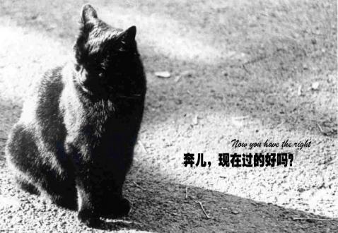 我的猫(爱猫的人可以看看) - 戴福气 - 很傻很天真