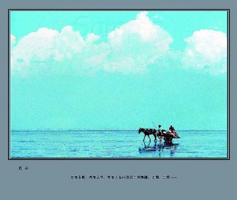 摄影家镜头里的黄河口风光之迷人的湿地 - 吴荣堂 - 吴荣堂的博客