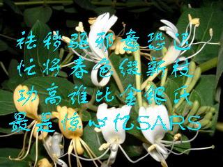 居楚漫记】七绝·和海雲之秋《七绝 金银花》 - 万友昌 - 八公山下  万友昌