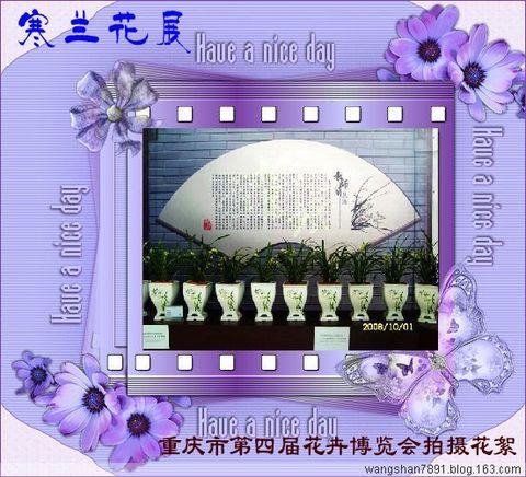 寒兰--重庆市第四届花卉博览会拍摄花絮 - 空谷幽兰 - 空谷幽蘭
