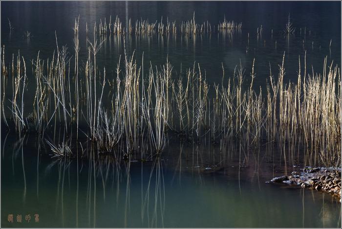[原创]冬日水中小景 - 迁徙的鸟 - 迁徙鸟儿的湿地