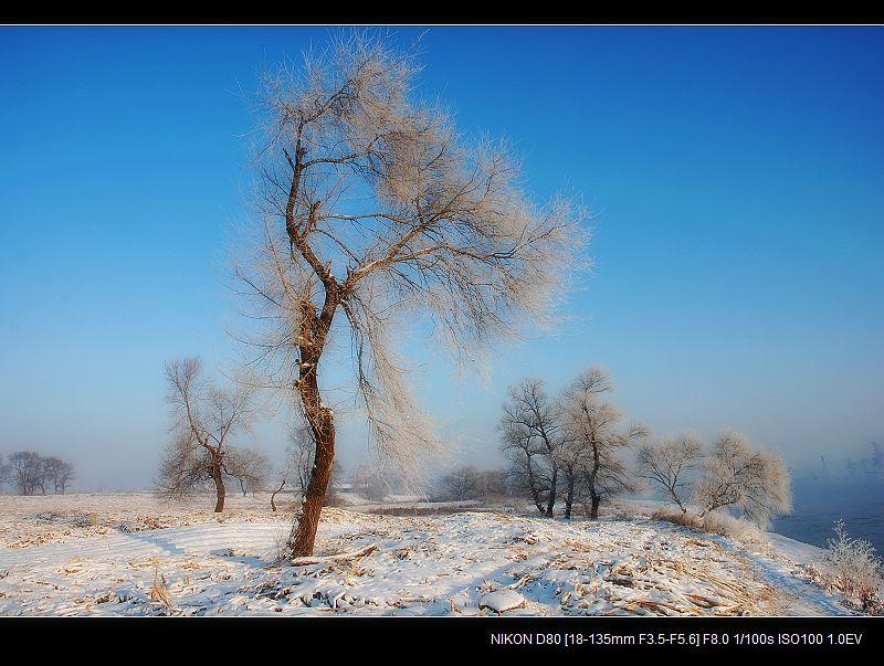 银白假期—雾凇真相 - 西樱 - 走马观景