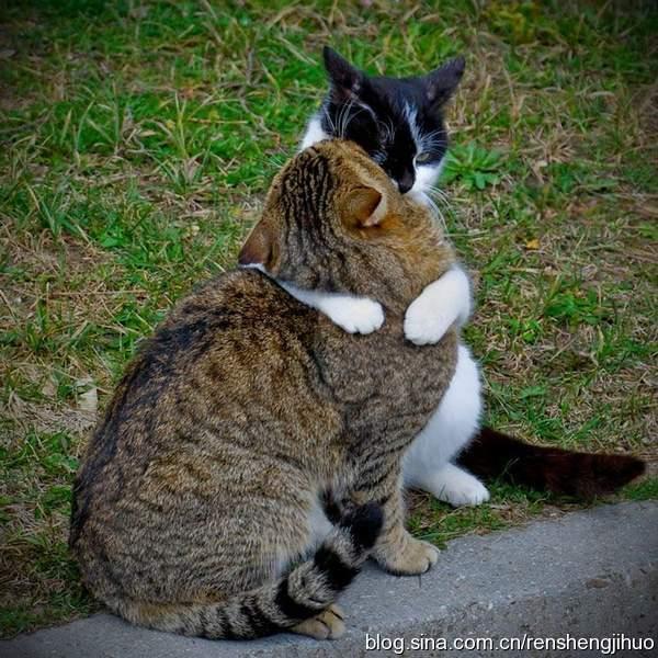 向人类的朋友学习爱