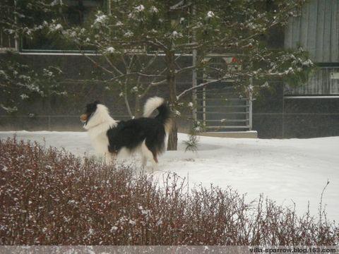 我生命中的第一场雪 - Villa - Villa的狗窝窝
