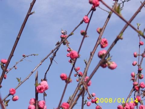 春闹枝头 - 涛声依旧 - 涛声依旧的博客