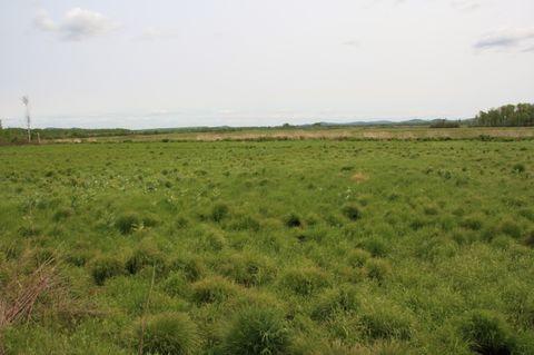 之一:塔头苔草沼泽