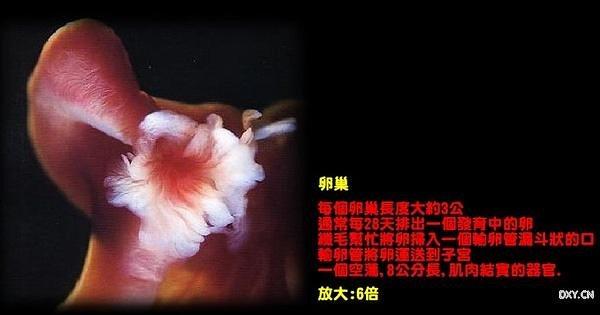 生命诞生 - 红芙蓉 - 红芙蓉的博客