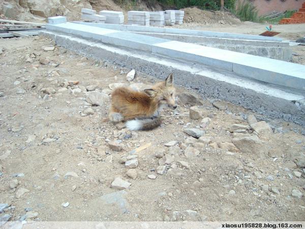 【原创】普渡寺青山九峰寺——狐狸的故事 - 晓苏 - 晓苏——菜鸟'女侠'的博客