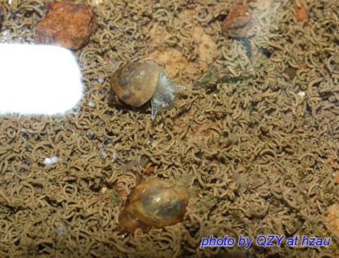 小小蜗牛的幸福生活(原创,转载请注明出处) - starlit.sky - starlit.sky的博客