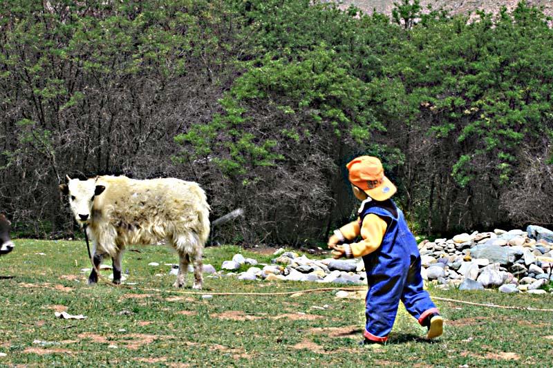 童心 - 玉树牧羊人 - 玉树牧羊人的博客