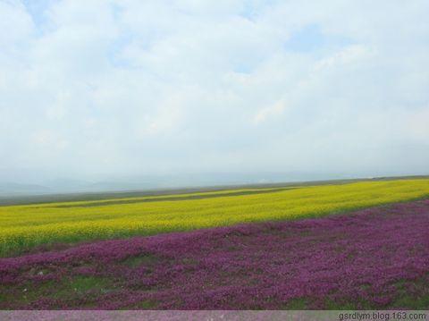 青海湖之行之3朵花 - 路有明的自然世界 - 路有明的自然世界