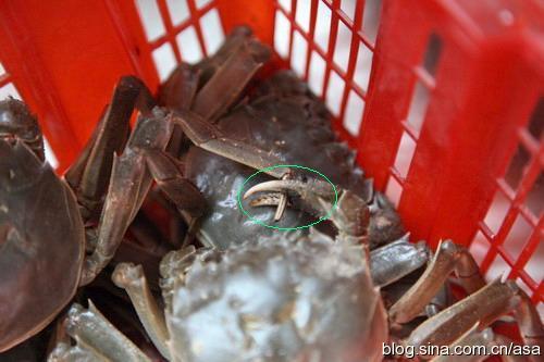 冬季的河蟹也很鲜美 - 懒蛇阿沙 - 懒蛇阿沙的博客
