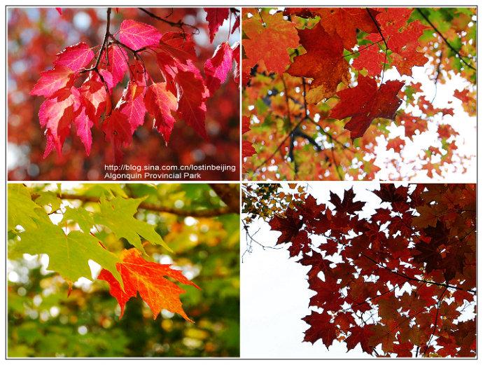 攀枝花金红色的冬天图片
