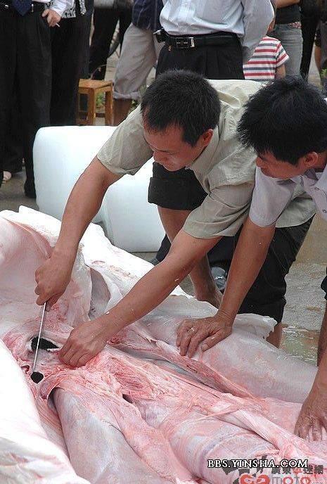 山东新泰市青云湖惊现吃人鱼 - Dandy - 每个时代,都有属于自己成长的故事