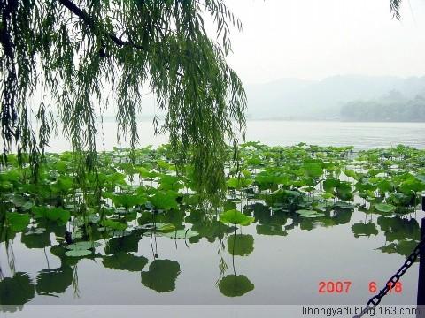 春荡漾(疏勒河的红柳)  - 疏勒河的红柳 - 疏勒河的红柳