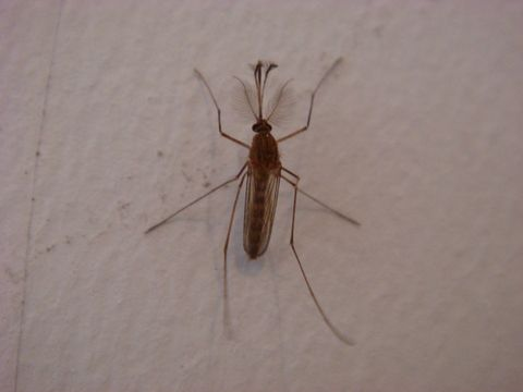 [原创]  冬 天 里 的 蚊 子 - 依依素影 - 素影的博客