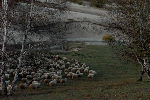 心灵对接(疏勒河的红柳原创) - 疏勒河的红柳 - 疏勒河的红柳