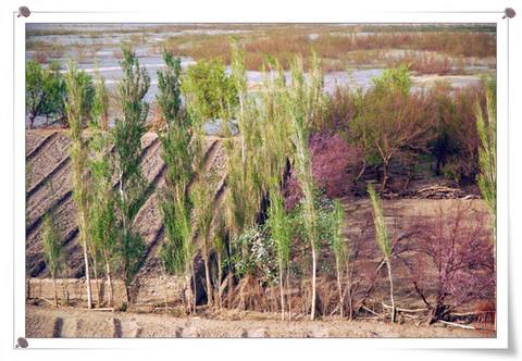 ...的草甸间或有被野火灼伤的焦痕欢快的溪流边还存着似乎永远...