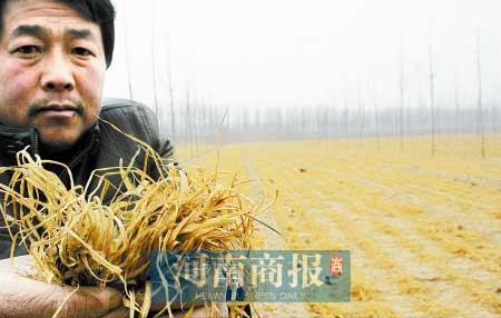 郑风田:北方大旱对我国的粮食价格走势影响如何? - 郑风田 - 郑风田的博客